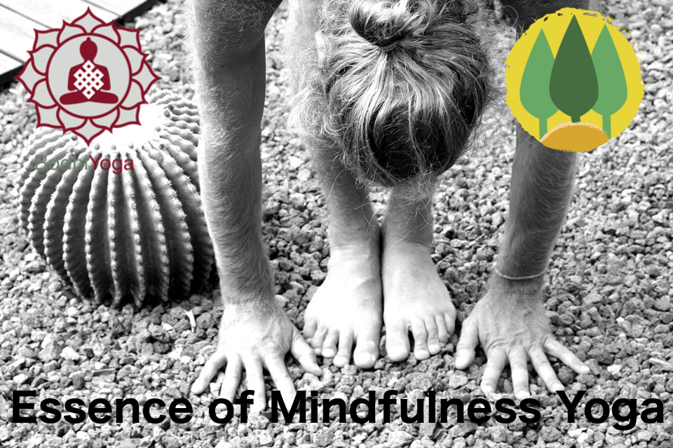 Essence of Mindfulness Yoga